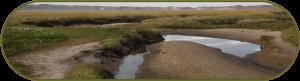 Een meanderende verbinding voor vissen en amfibieën is onderdeel van het Natuurnetwerk Nederland